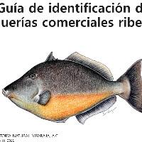 GUIA-DE-IDENTIFICACION-DE-PESQUERIAS COMERCIALES RIBERENAS